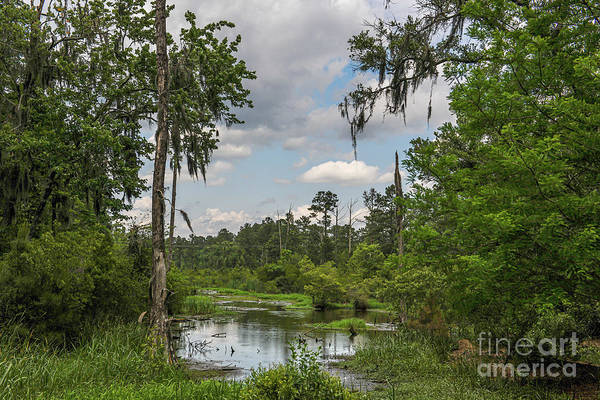 Photograph - Lowcountry Playground - Popular Grove by Dale Powell