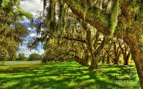 Photograph - Lowcountry Shadows Tomotley Plantation Live Oaks South Carolina Landscape Art by Reid Callaway
