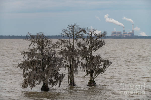 Photograph - Lowcountry Winter - Lake Moultrie by Dale Powell