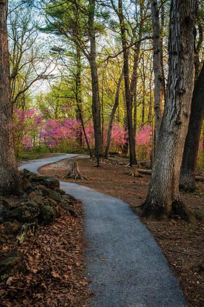 Photograph - Lrt Path by Dan Urban