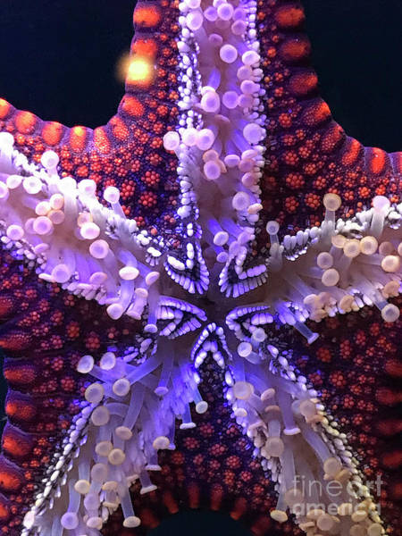Photograph - Lucky Starfish by Karen Adams