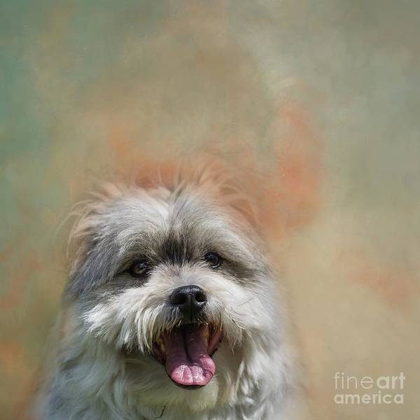 Photograph - Lucy by Eva Lechner