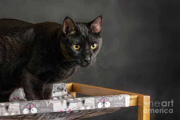 Photograph - Luigi House Panther by Susan Warren