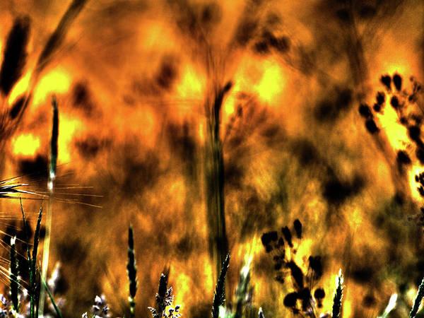 Photograph - Lumiere Des Herbes by Jorg Becker