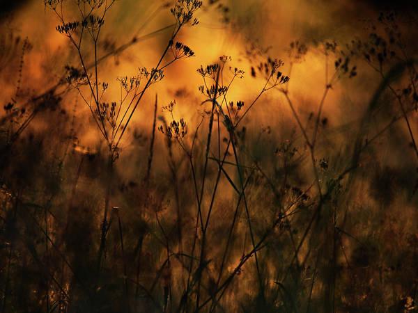 Photograph - Lumieres Des Herbes 1 by Jorg Becker