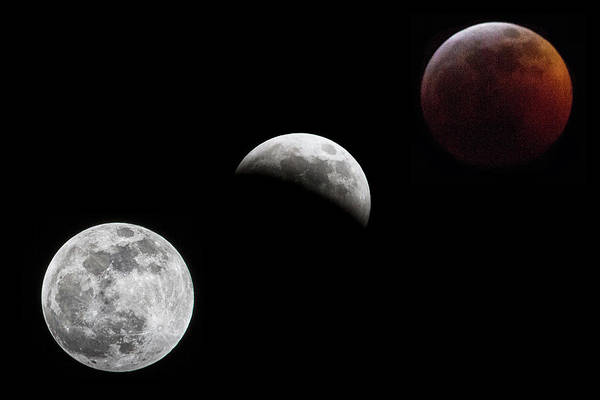 Photograph - Lunar Eclipse by Bob Decker