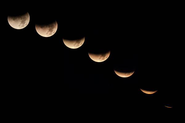 Covering Photograph - Lunar Eclipse, Phases by Don Grall