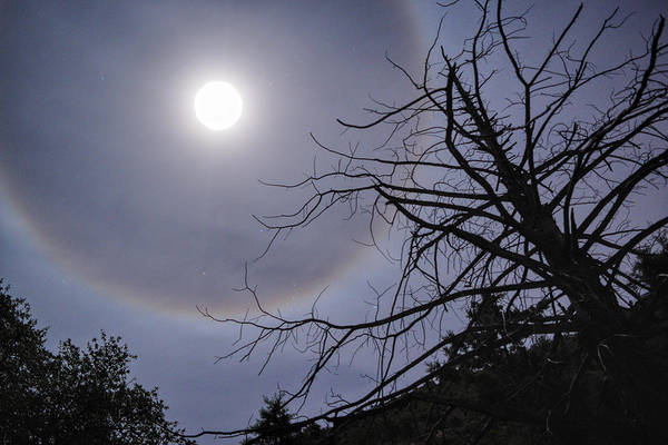 Photograph - Lunar Halo And Tree by Chance Kafka