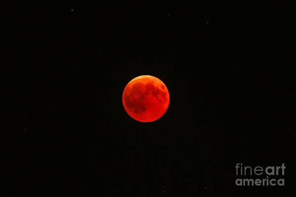 Photograph - Lunar Red Eclipse by Benny Marty