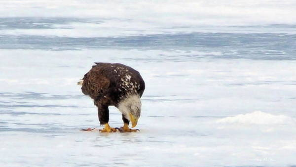 Photograph - Lunch On Ice by Harry Moulton
