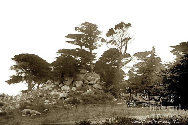 Photograph - Lunching Grove 17 Mile Drive Pebble Beach by California Views Archives Mr Pat Hathaway Archives