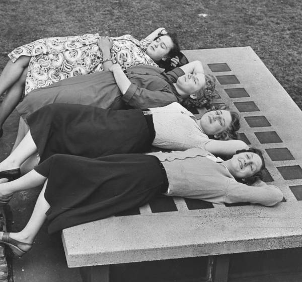 Sweater Photograph - Lunchtime Siesta by Fred Morley