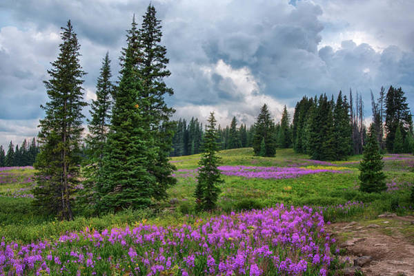 Wall Art - Photograph - Lupine Filled Meadow In The Colorado Rockies. by Dave Dilli
