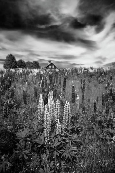 Digital Art - Lupine For Ansel by Patrick Groleau