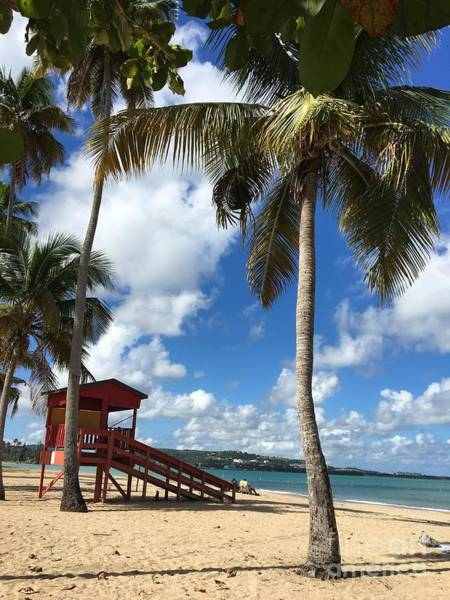 Photograph - Luquillo Beach by The Art of Alice Terrill