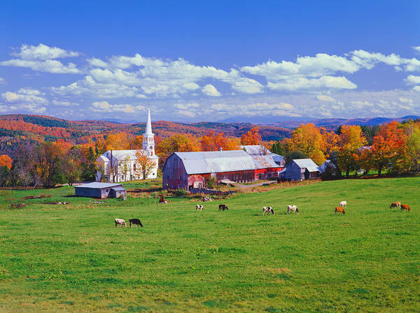 Cow Photograph - Lush Autumn Countryside In Vermont With by Ron thomas