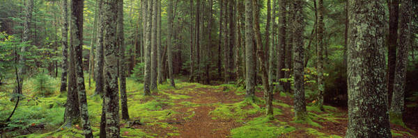 Wall Art - Photograph - Lush Forest, Acadia National Park, Maine by Panoramic Images