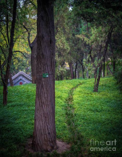 Wall Art - Photograph - Lush Garden Path by Mike Reid