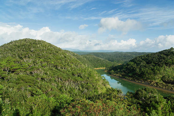 Okinawa Photograph - Lush Green Forest With River, Okinawa by Ippei Naoi