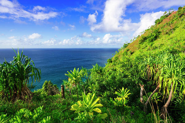 Wall Art - Photograph - Lush Vegetation Along The Kalalau by Russ Bishop