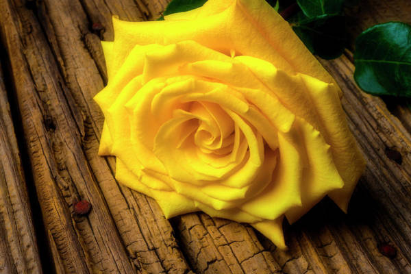Foilage Photograph - Lush Yellow Rose by Garry Gay
