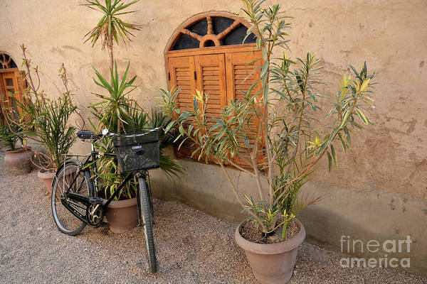 Wall Art - Photograph - Luxor Bike by Andrea Simon