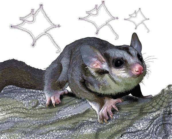 Drawing - M Is For Mahogany Glider by Joan Stratton