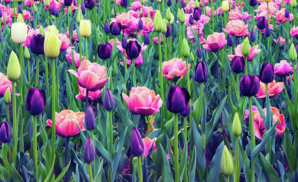 Wall Art - Photograph - Teeming With Tulips by Jessica Jenney