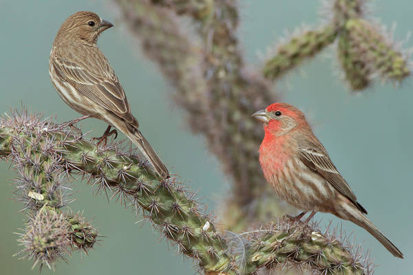 Photograph - Ma And Pa H Finch by Gerry Sibell