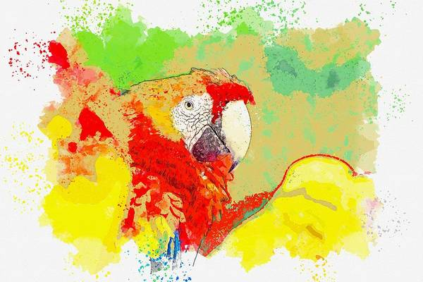 Wall Art - Painting - Macaw , Costa Rica -  Watercolor By Ahmet Asar by Ahmet Asar