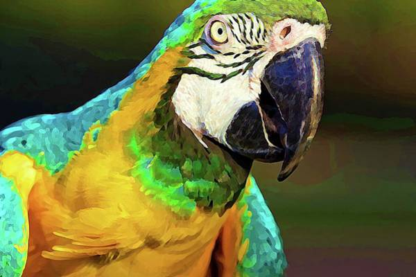 Photograph - Macaw Colorful by Alice Gipson