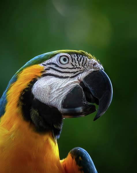 Photograph - Macaw by Cyndy Doty