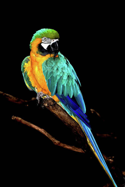 Louisiana Photograph - Macaw by David Keith Jr. (all Rights Reserved)