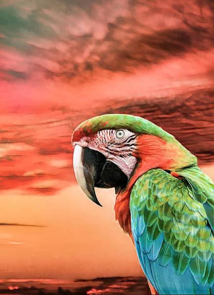 Photograph - Macaw Parrot by Rosalie Scanlon
