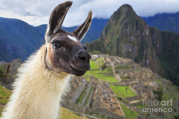 Travel Destinations Wall Art - Photograph - Machu Picchu, Peru, Unesco World by Sunsinger