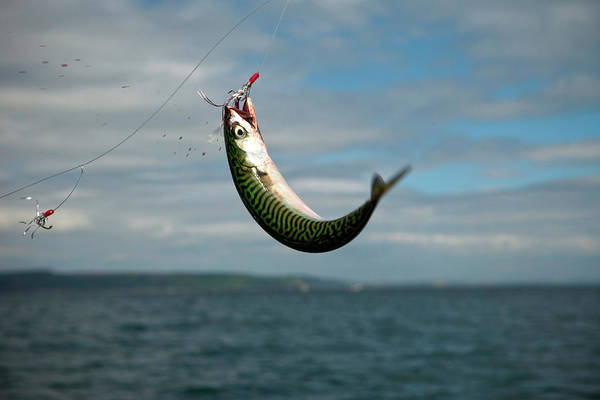 Fish Trap Photograph - Mackerel Fishing On Saundersfoot Bay by Huw Jones