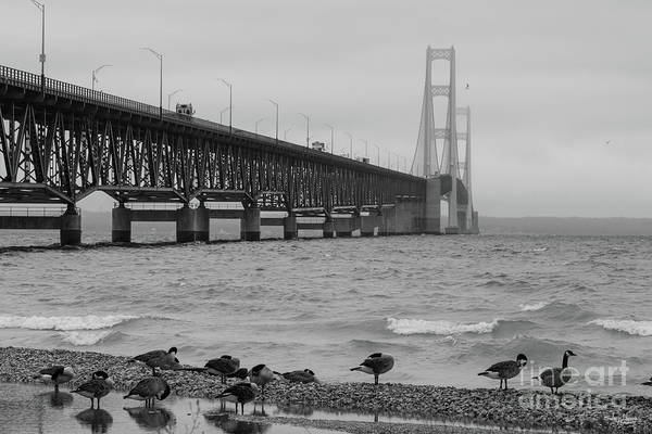 Michilimackinac Wall Art - Photograph - Mackinac Bridge With Geese Grayscale by Jennifer White