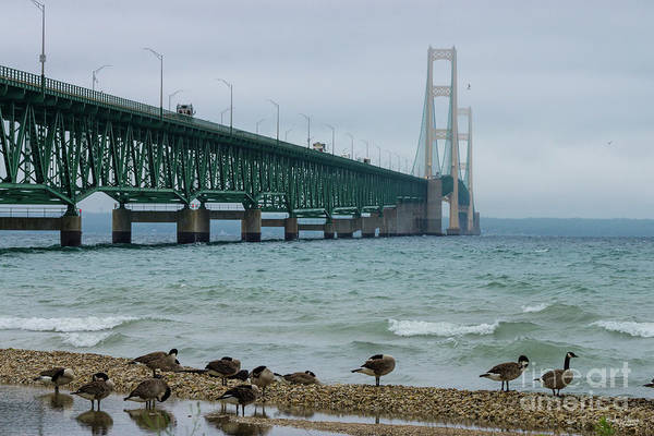 Michilimackinac Wall Art - Photograph - Mackinac Bridge With Geese by Jennifer White