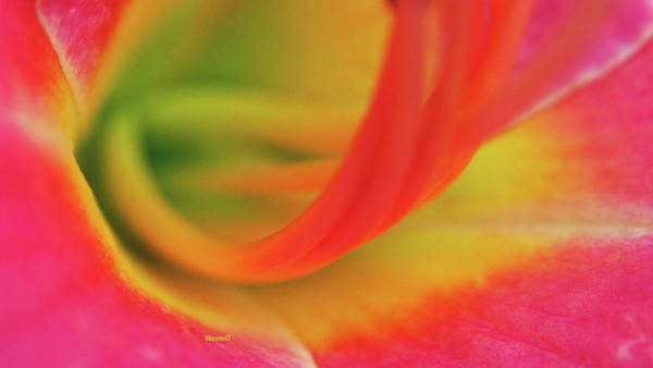 Wall Art - Photograph - Macro F 23  by Dennis Baswell