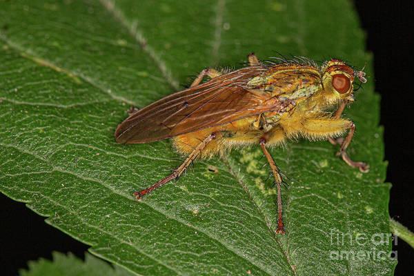 Photograph - Macro Fly by Brian Roscorla
