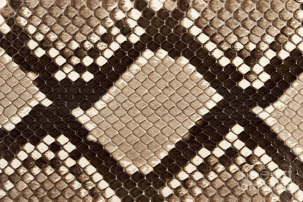 Wall Art - Photograph - Macro Image Of The Python Skin by Images And Videos