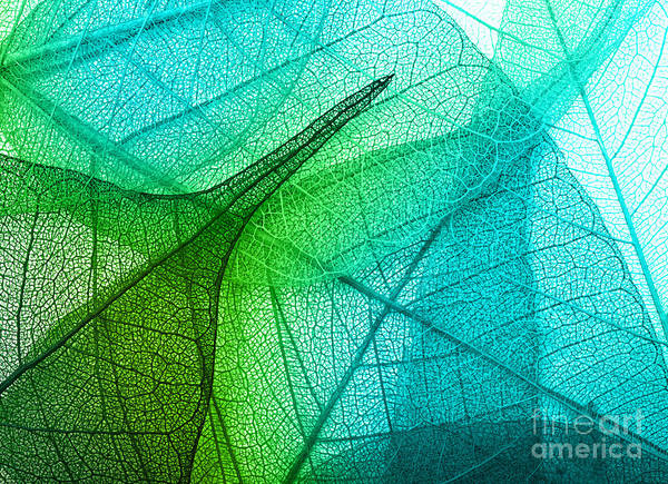 Organic Garden Wall Art - Photograph - Macro Leaves Background Texture by Valentina Razumova