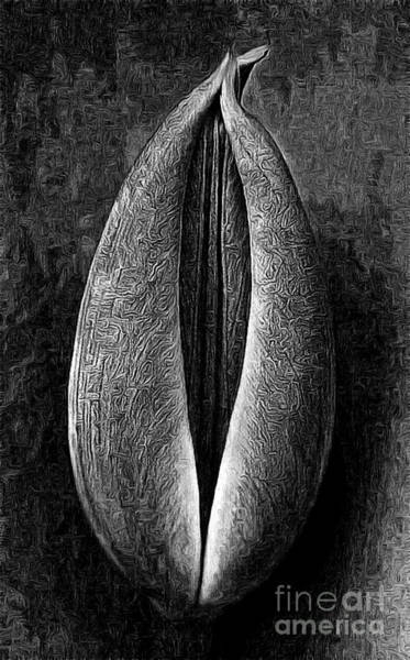 Painting - Macro Of Tulip Flowers by Odon Czintos