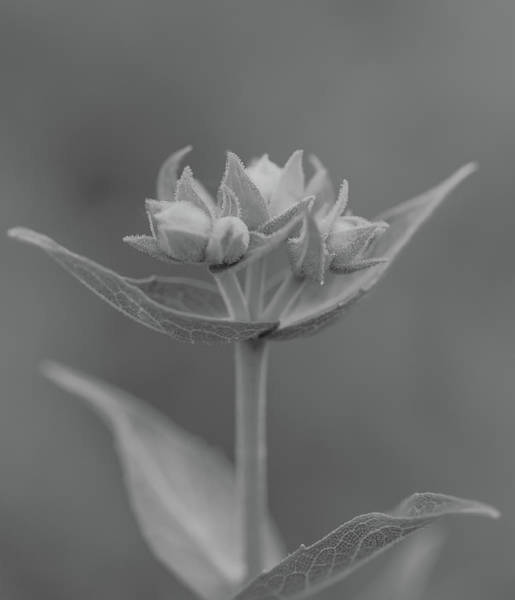 Photograph - Macro World Black And White by Dan Sproul