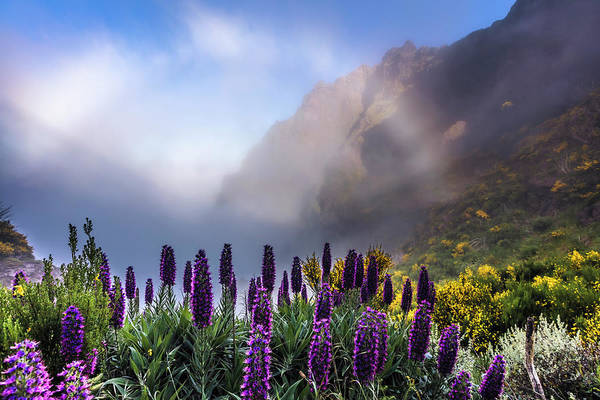 Photograph - Madeira by Evgeni Dinev