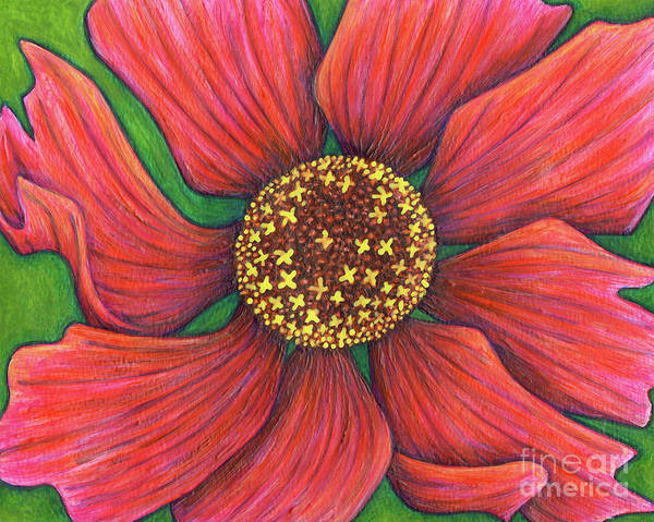 Painting - Magenta Coreopsis by Amy E Fraser