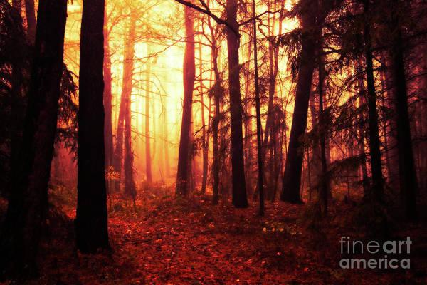 Wall Art - Photograph - Magic Forest by Michal Boubin
