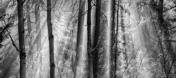 Photograph - Magic Moments by Theresa Tahara
