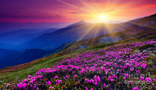 Beautiful Sunrise Photograph - Magic Pink Rhododendron Flowers On by Creative Travel Projects