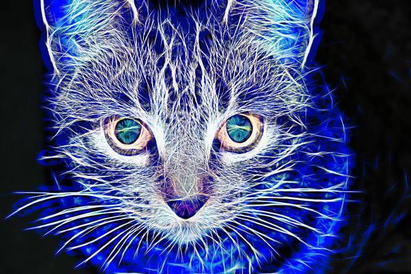 Wall Art - Photograph - Magical Cat by Karen Silvestri